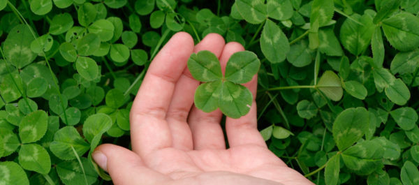 How To Find A 4 Leaf Clover (literally And In Your Marketing)